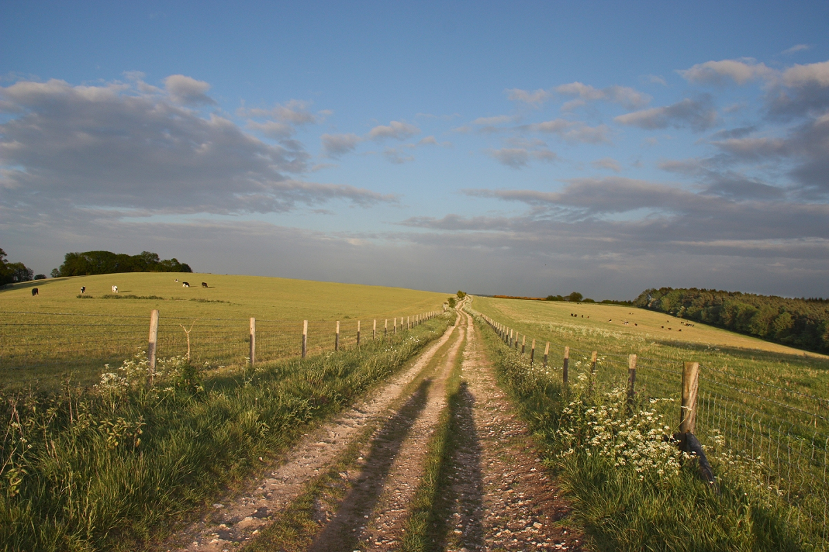 The South Downs Way at Bepton Down